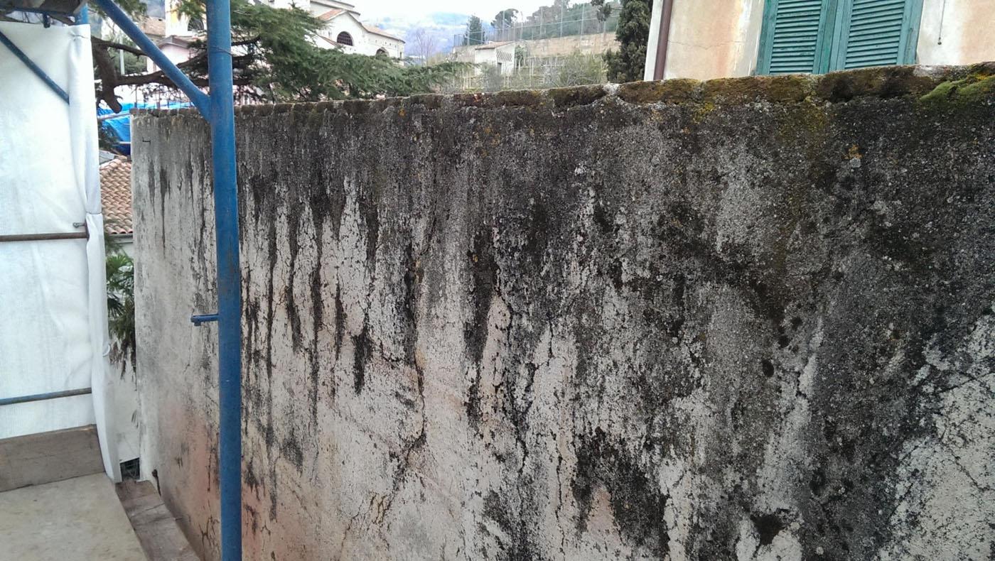 Porzione di parete Ovest infestata da muffe